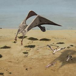 palaeo, coloborhynchus piscator, painting, paleo, pterosaurs, south america, anhanguera, naturalistic, birds, buzzing, beach, seaweed, squid