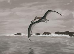 palaeo, coloborhynchus piscator, painting, paleo, pterosaurs, south america, anhanguera, naturalistic