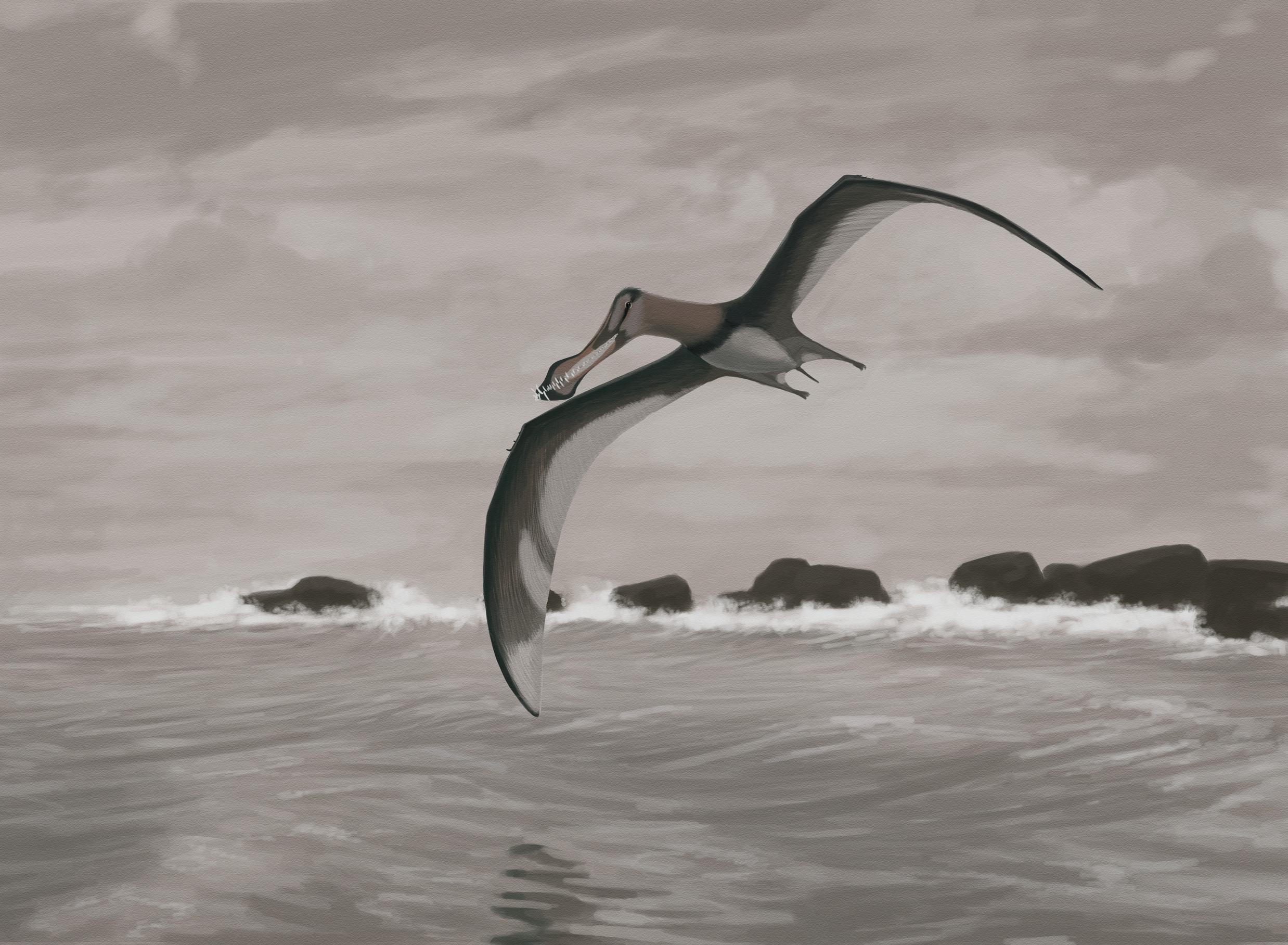palaeo, coloborhynchus piscator, painting, paleo, pterosaurs, south america, anhanguera
