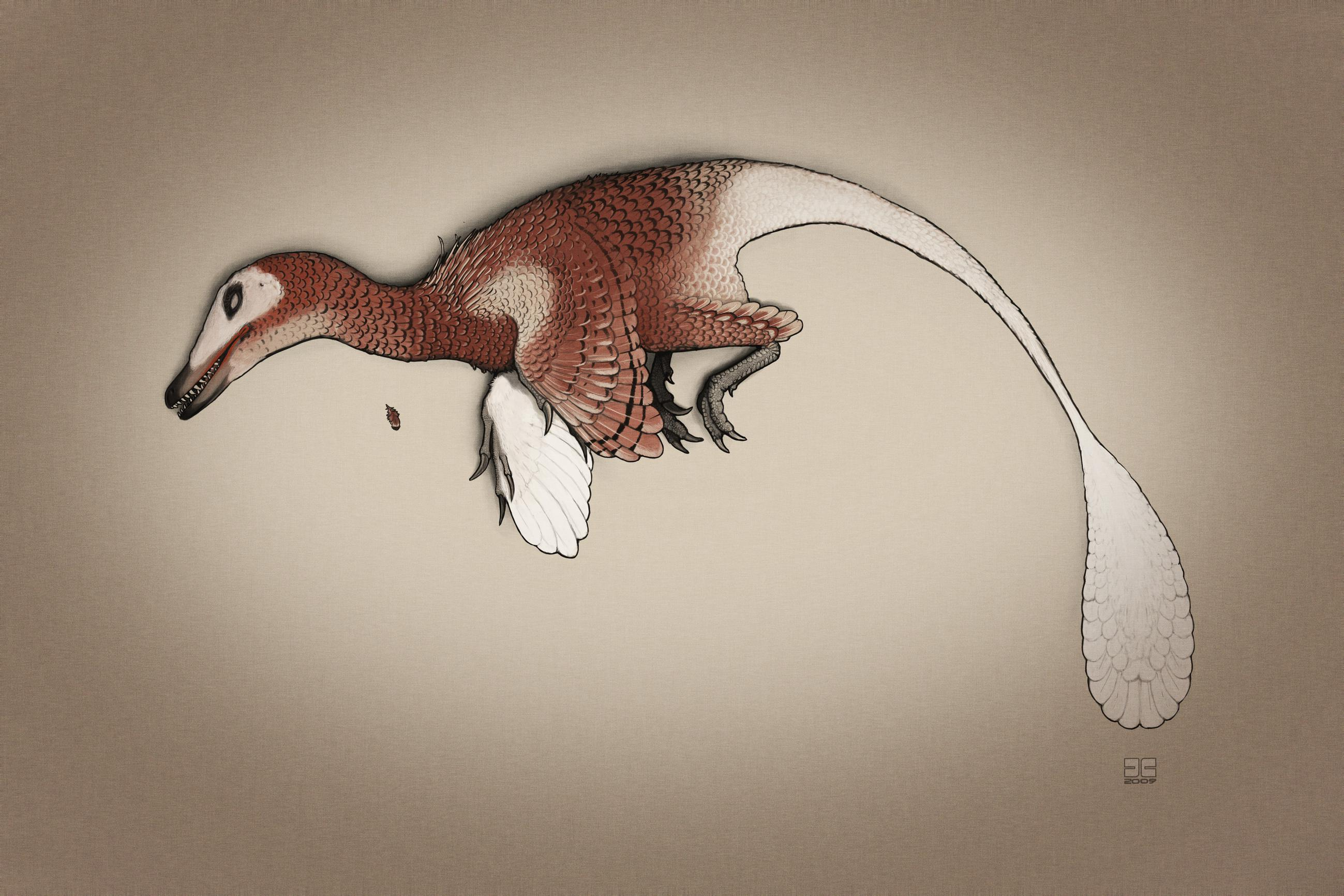 palaeo, painting, paleo, dinosaurs, mesozoic, mongolia, cretaceous, theropods, raptors, feathered dinosaurs, dead