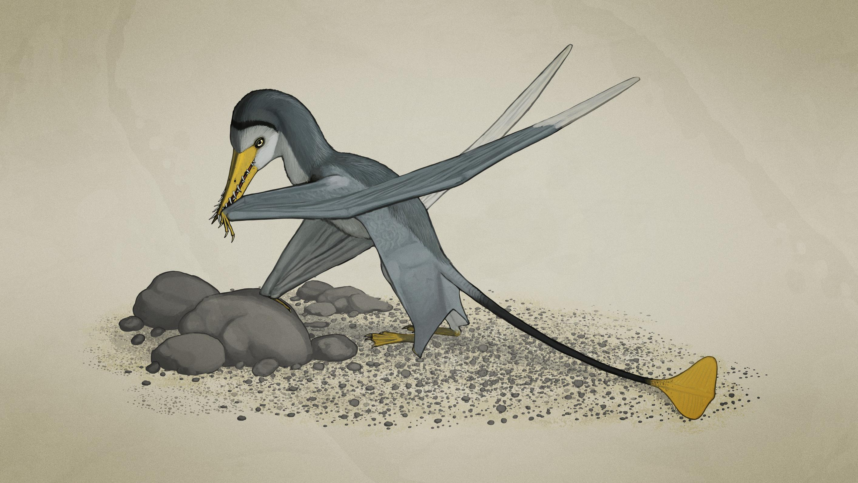 palaeo, pterosaurs, painting, jurassic, rhamphorhynchus, rhamphorhynchoids, solnhofen
