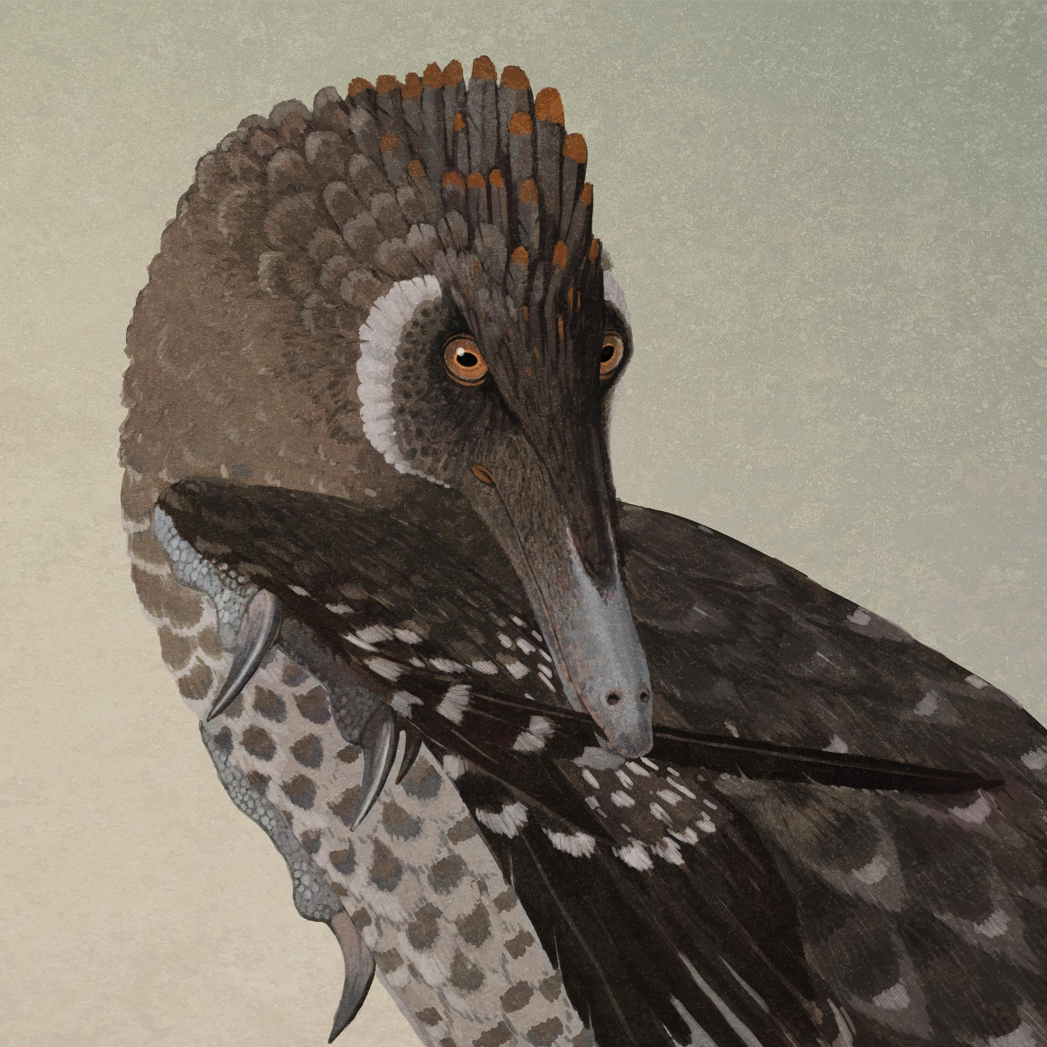 velociraptor mongoliensis by john conway